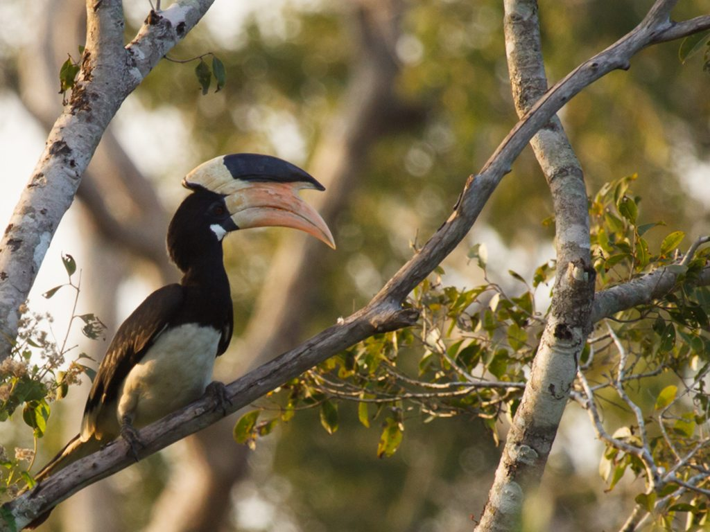 The First Bird Festival of Goa Left The Visitors Mesmerized