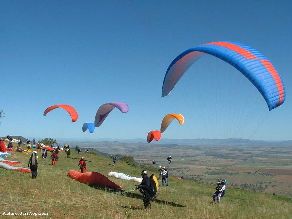 Bird Wallpaper Do You Want To Fly Like A Bird Try Paragliding In India