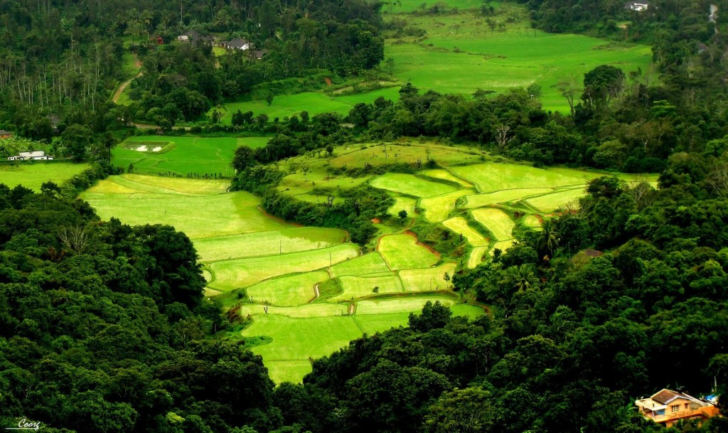 10 Coorg