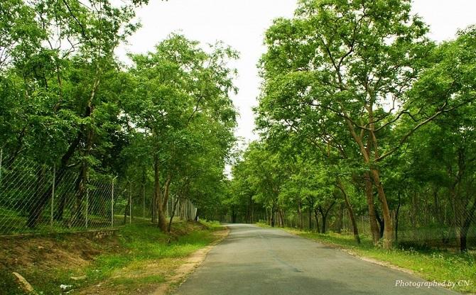 marayoor forests 13