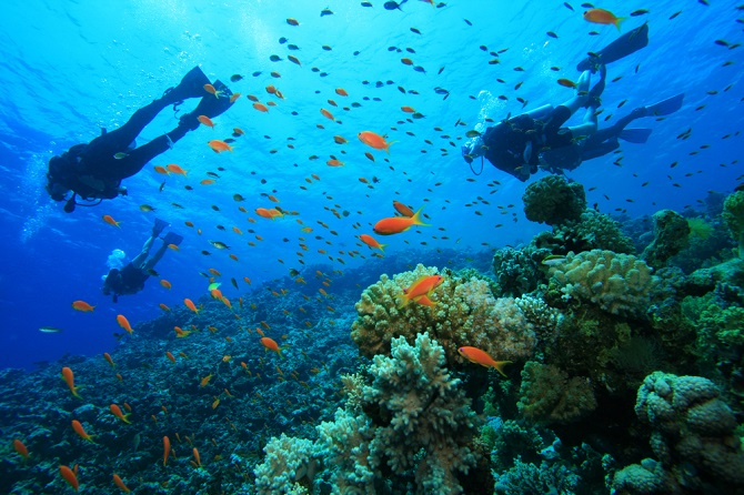 Image result for Aravind's Wall in Pondicherry  snorkeling  images