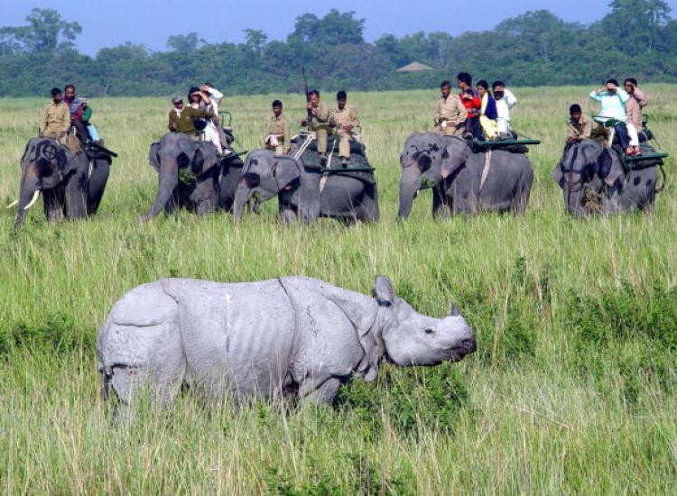 Kaziranga National Park