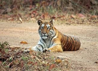 Navegaon-Nagzira Tiger Reserve