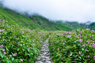 Treks Near Valley Of Flowers