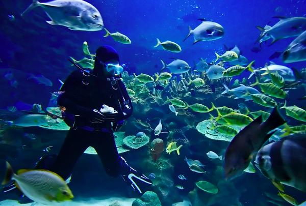 scuba-diving-tour-to-mumbai-travellers