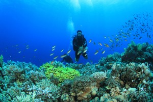 Five Major Destinations In India To Enjoy The Thrill Of Underwater Diving