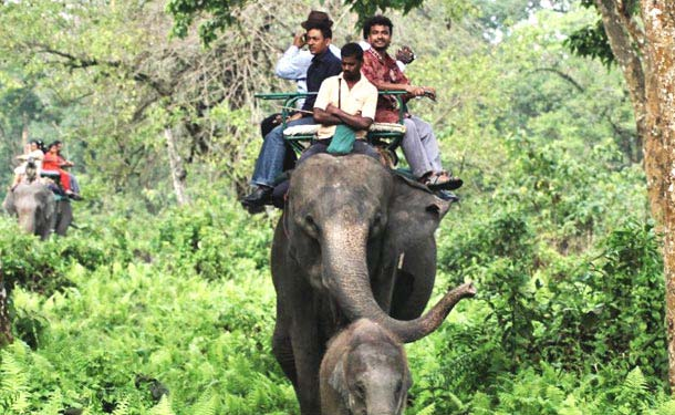 elephant safari Jim corbett National Park