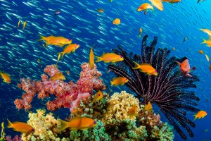 Experience The Thrill Of Scuba Diving In Andaman
