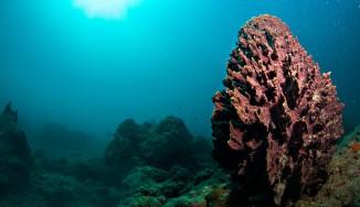 Scuba Diving In India
