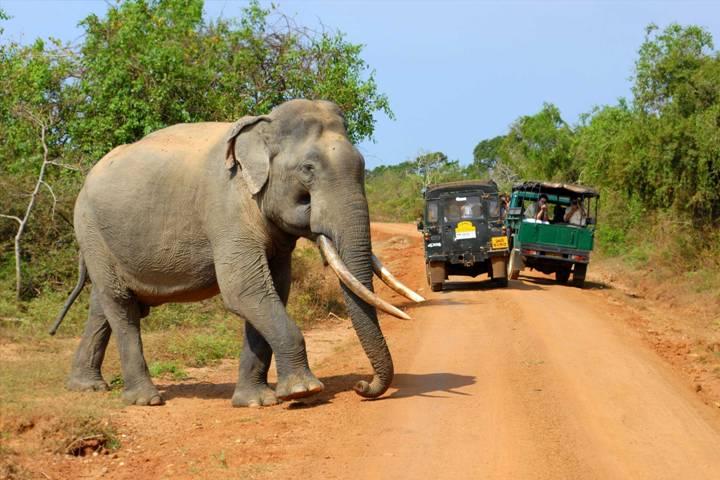 jeepsafari-yala national park