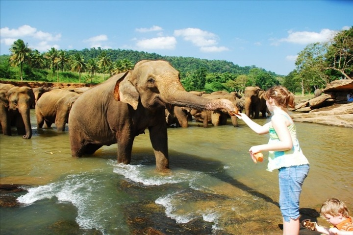 pinnawall-elephant-orphanage
