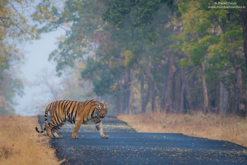 An Introduction Guide For Tadoba Andheri Tiger Reserve