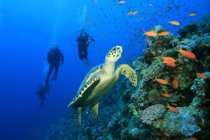 Top Destinations For Scuba Diving In India