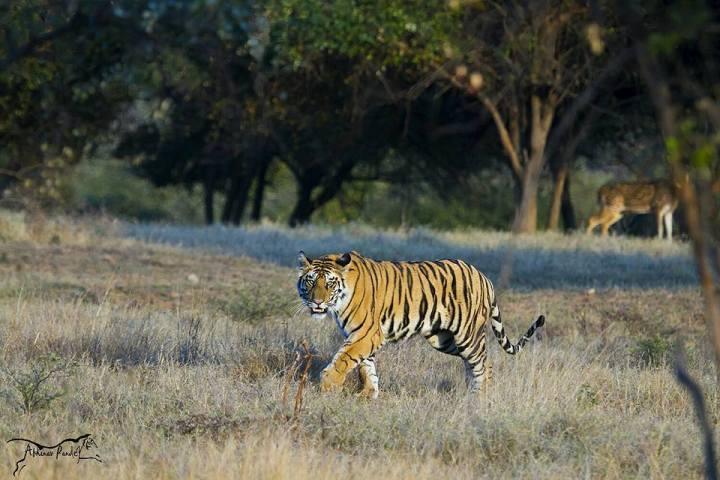 Panna National Park Wildlife