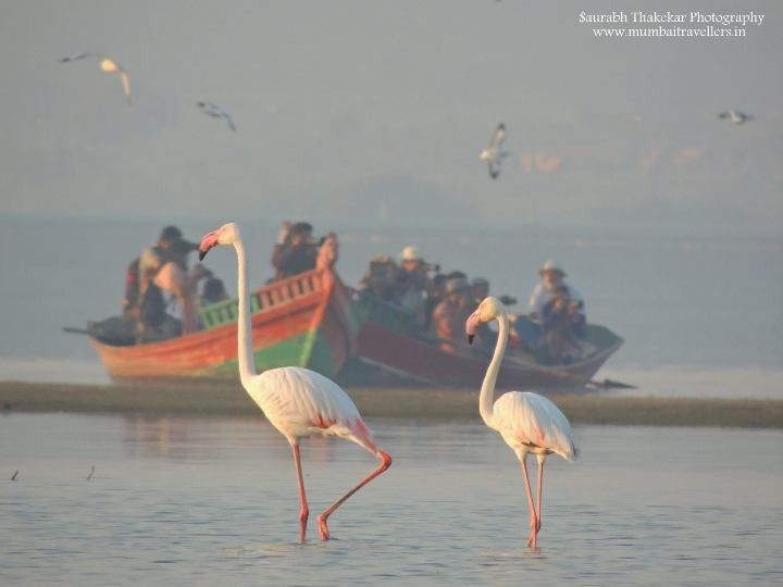 Bhigwan-Birdwatching-Trip-with-Mumbai-Travellers-720x540