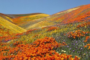 DIY – How to Plan Your Expedition To The Valley of Flowers.