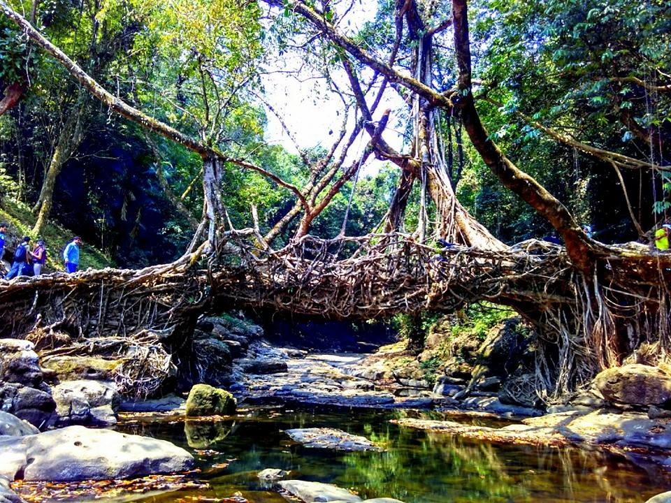 Living-Root-Bridge-at-Meghalaya-with-Mumbai-Travellers