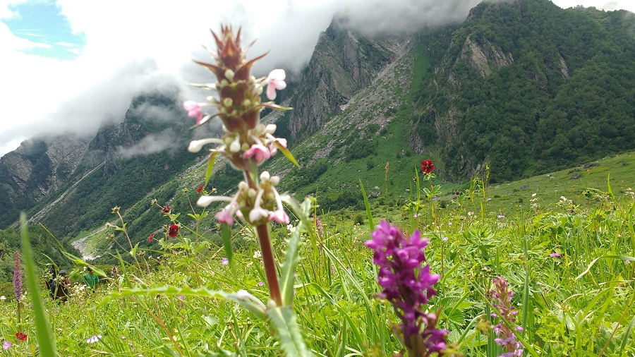 valley-of-flowers-2