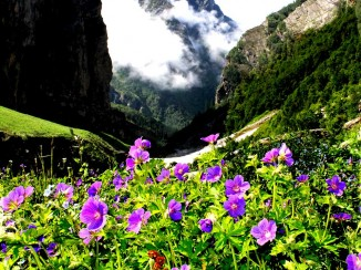 Valley-of-flowers (1)