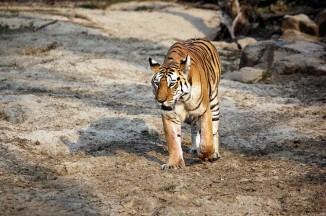 pench national park safari booking