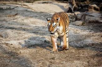 pench national park safari booking