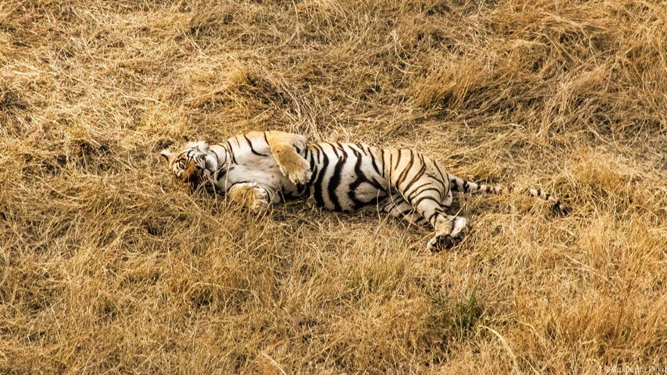 ranthambore national park safari,