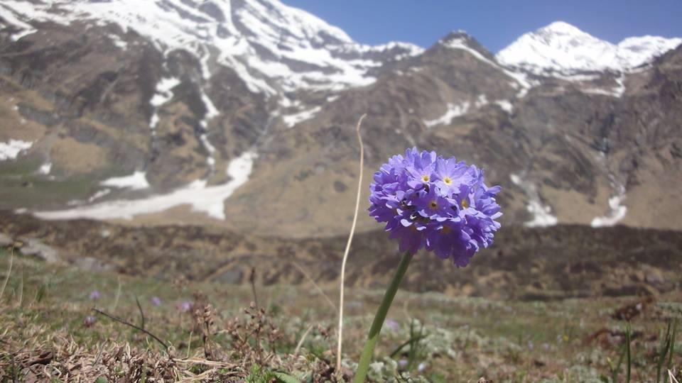 pindari glacier trek 1