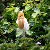 Ranganathittu Bird Sanctuary Tour