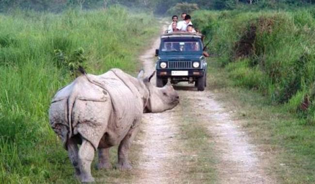 Wildlife at Chinnar