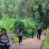 Tadiandamol Trek In Coorg