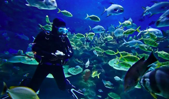 Scuba Diving at Konkan