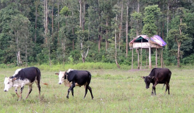 Muthanga Nature Trail