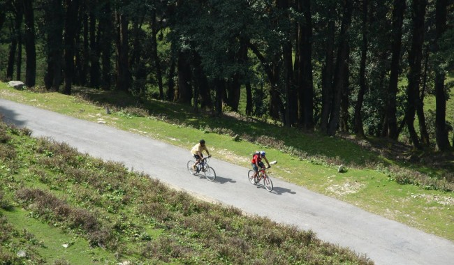 Cycling In Munnar