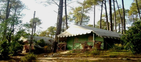 Tree House in Pine Forest in Shimla img