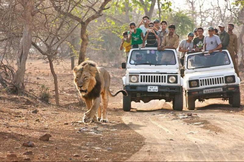 480c5123 Devaliya Safari Park, Devaliya Safari Booking Online